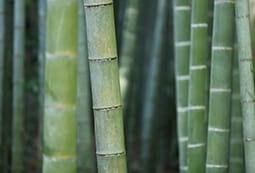 Zavivki-s-pulnezh-ot-bambuk
